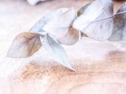 Still life leaves
